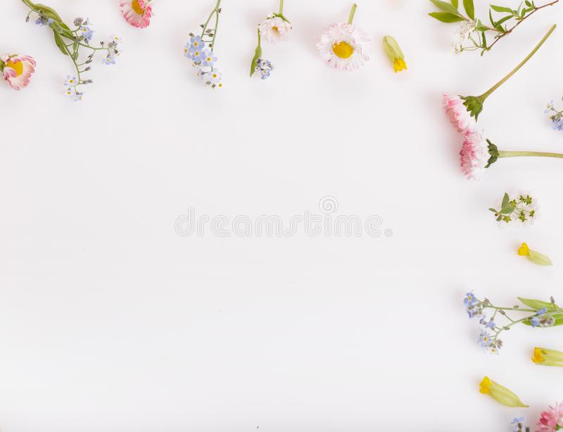 Pink flowers frame on white background. royalty free stock images