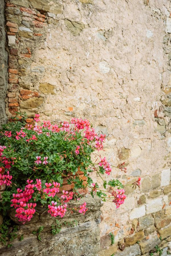 Pink flowers in front of stone wall in a small village of medieval origin. Volpaia, Tuscany, Italy. Pink flowers and bushes in front of stone wall in a village stock photography
