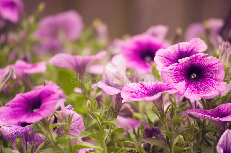 Pink flowers. In a garden royalty free stock photography