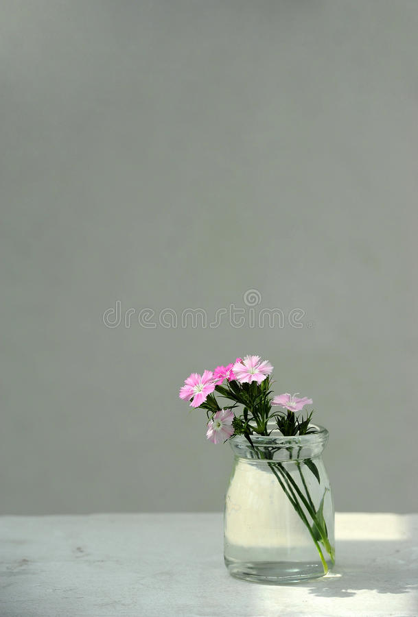 Download Pink Flowers In A Glass Bottle Stock Photo - Image: 19097420