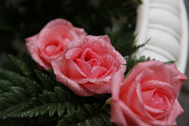 Pink flowers between green leaves stock photos