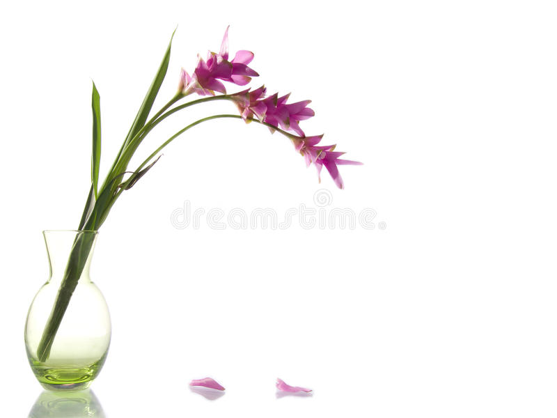 Pink flowers in green vase stock photo