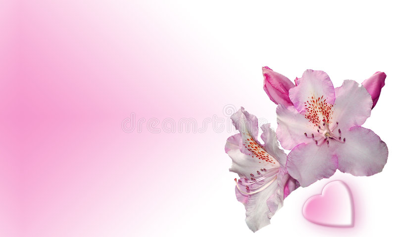 Pink flowers with heart stock illustration illustration of blossom download pink flowers with heart stock illustration illustration of blossom 572297 mightylinksfo