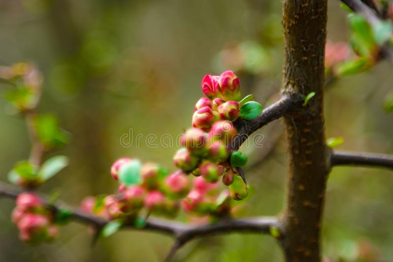 Pink flowers and heart in spring garden. Spring blooming cherry flowers branch on blurred natural abstract background stock images