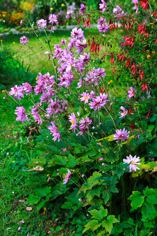 Free Pink Flowers In The Garden Stock Photo - 3250020