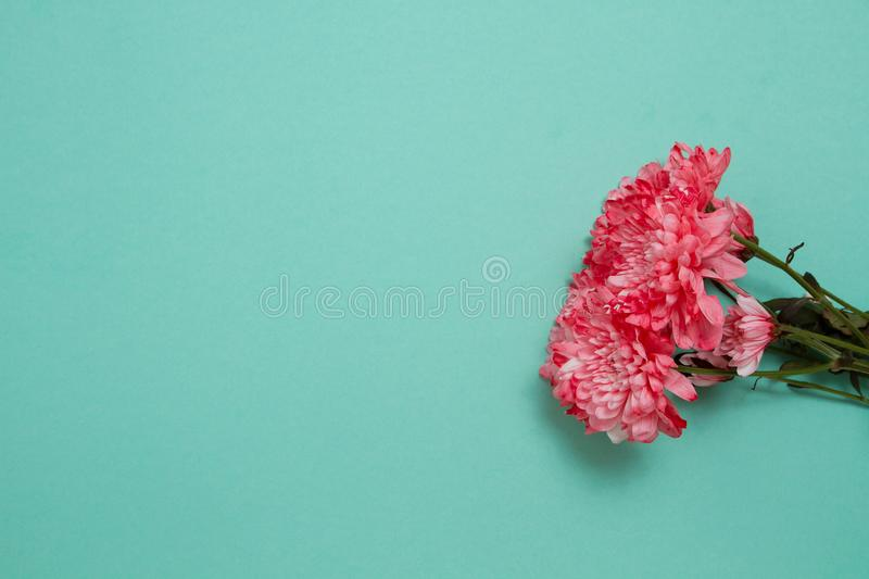 Pink flowers isolated. Postcard with copy space and template background. Top view. Mother day and valentines concept. Flower. Delivery and online order luxury stock image
