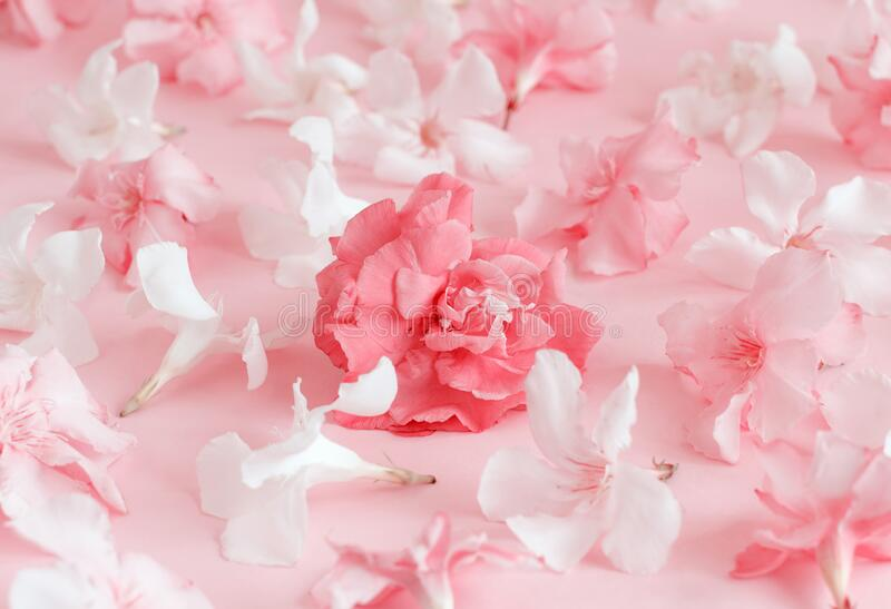 Pink flowers on light pink background stock photos