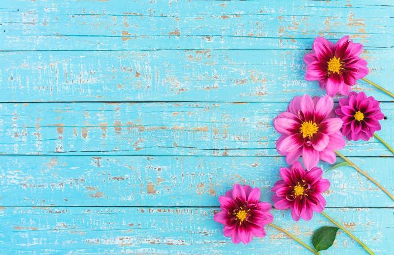 Pink flowers on light blue wood stock photo