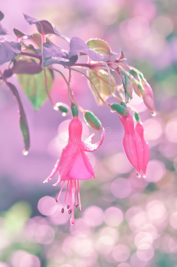 Pink flowers and lovely bokeh. Little Pink flowers with warm light and lovely bokeh stock images