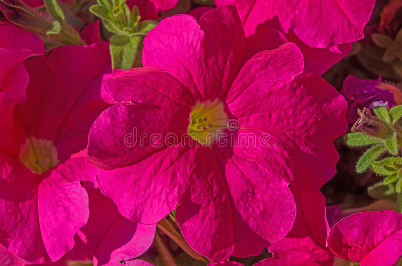 Pink flowers macro royalty free stock photos