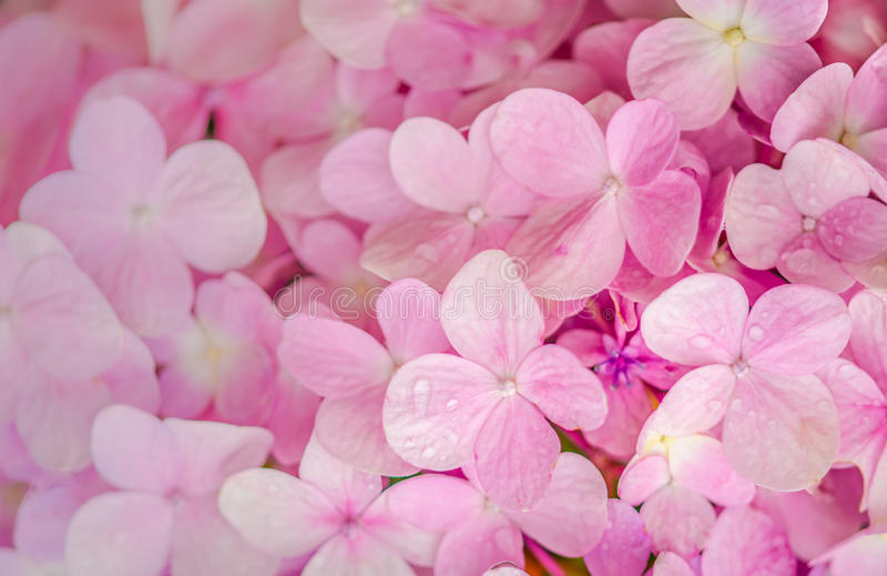 Pink flowers meaning of love stock image image of decoration download pink flowers meaning of love stock image image of decoration girl mightylinksfo