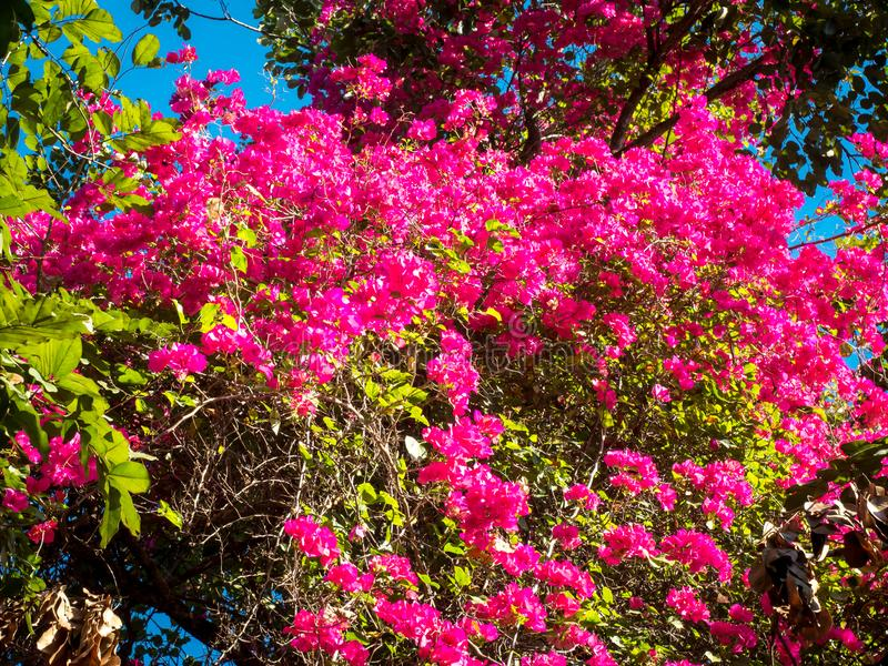 Pink flowers in the morning.01 stock photos