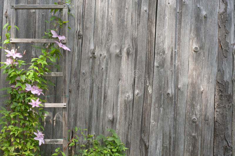 Pink flowers on an old wooden wall royalty free stock photos