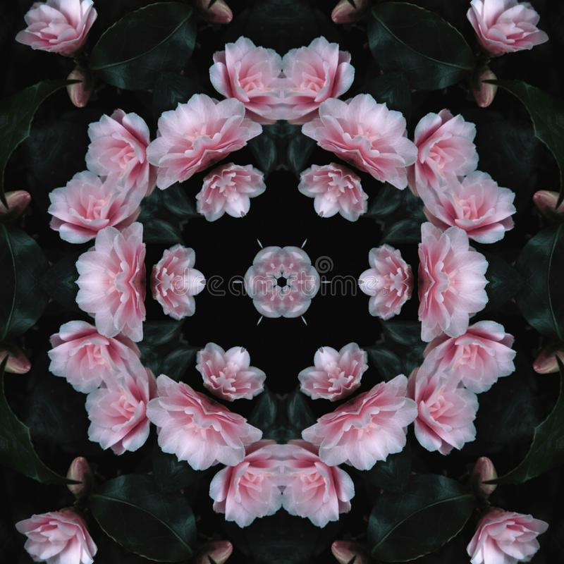Pink flowers in one group stock image