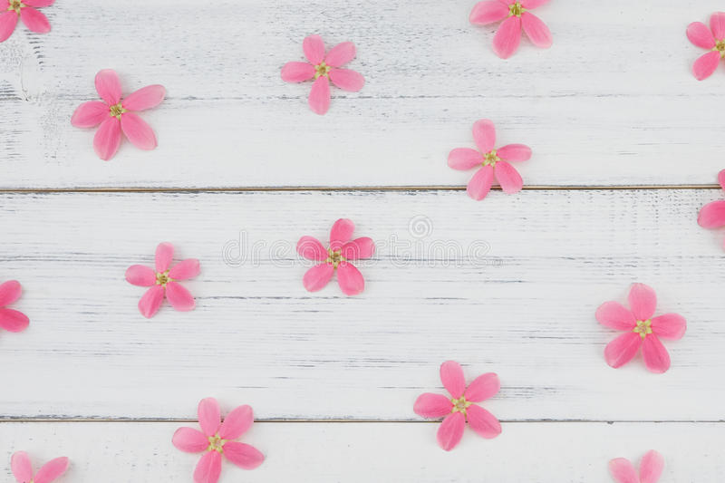 Pink flowers pattern on white wood stock photography