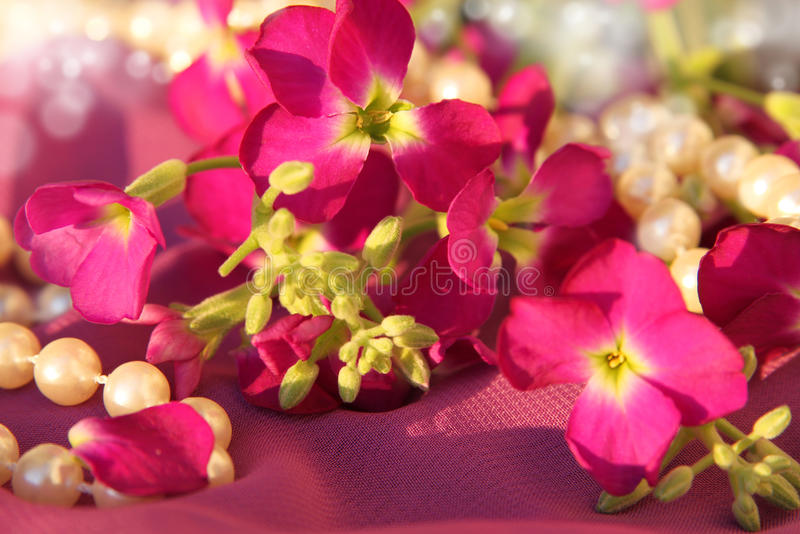 Pink flowers and pearls royalty free stock images