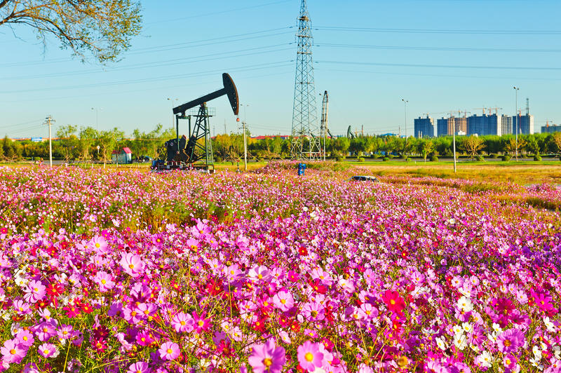 The pink flowers and pumping unit