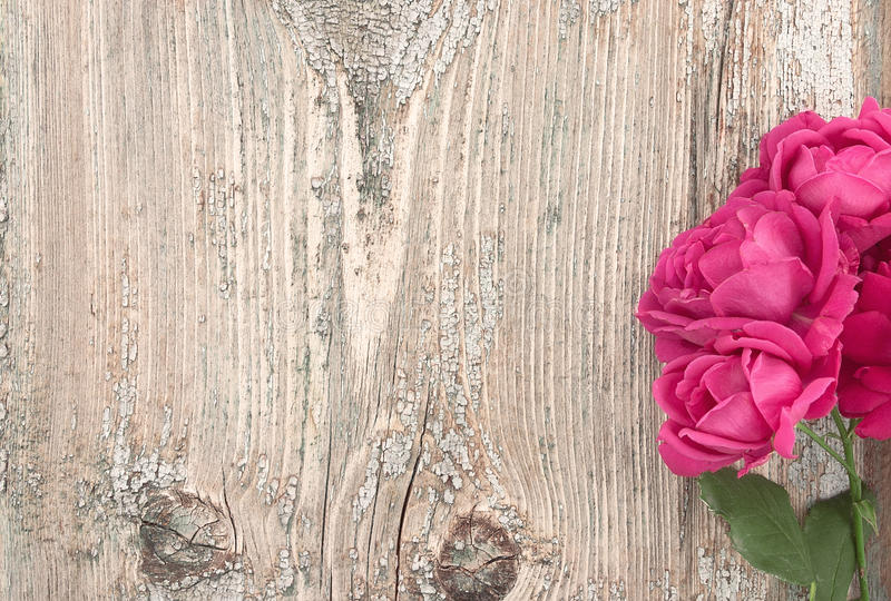 Download Pink Flowers Roses On Rustic Wooden Background With Copy Space F Stock Photo