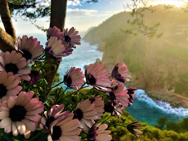 Pink flowers, sea, cliff and fairytale in Tossa de Mar, Spain stock image