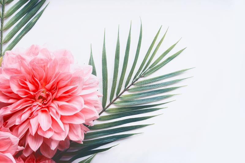 Pink Flowers And Tropical Leaves On On White Desktop Background Top View Creative Layout With Copy Space Border Stock Photo Image Of Pastel Beauty 103694110