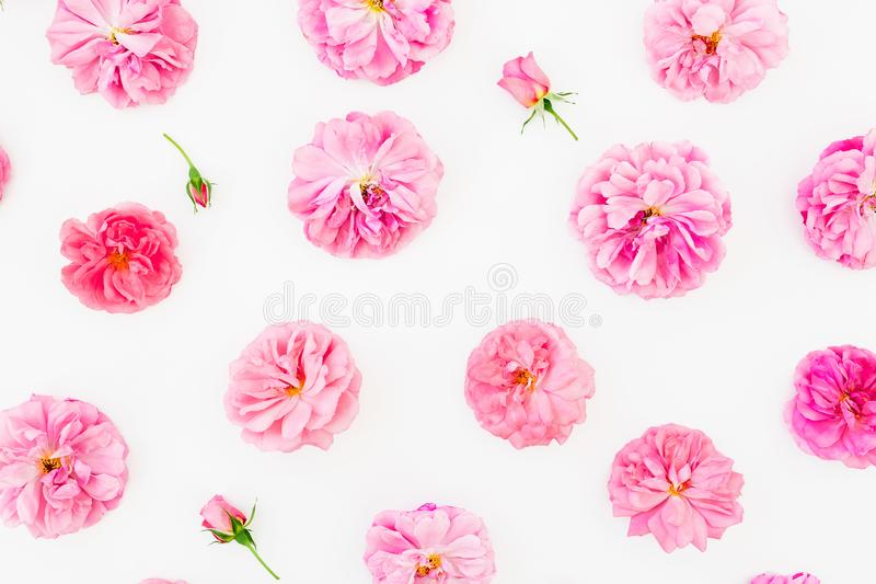 Pink flowers on white background. Floral lifestyle composition. Flat lay. Pink flowers on white background. Floral lifestyle composition royalty free stock photography