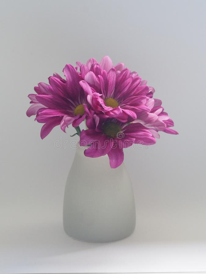 Pink Flowers on White Vase royalty free stock image