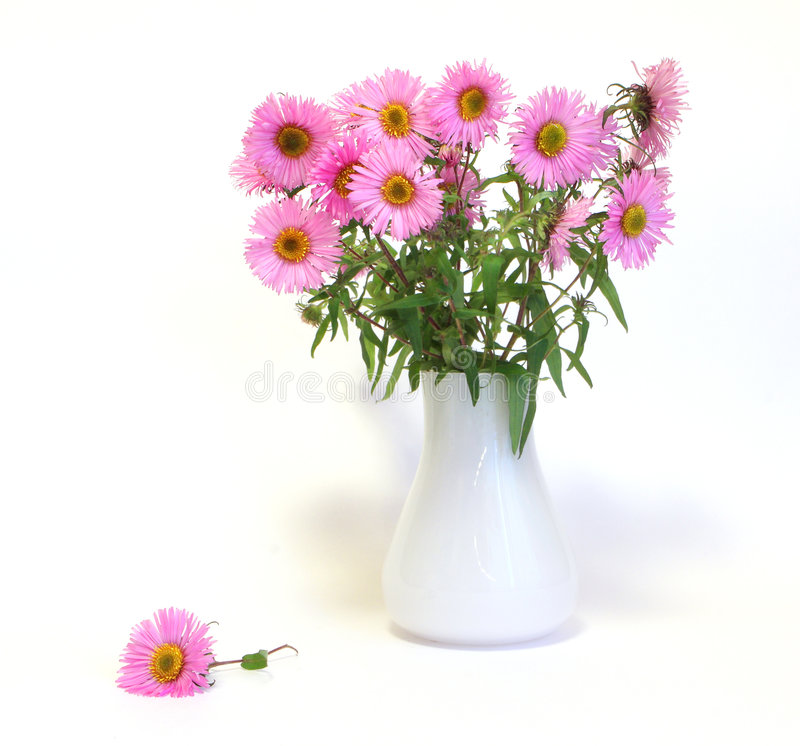 Pink flowers in the white vase royalty free stock photo