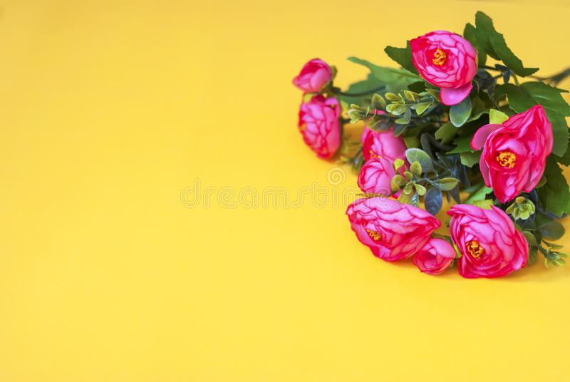 Pink flowers on a yellow background. Flat lay. Pink flowers on a yellow  background. Flat lay royalty free stock image