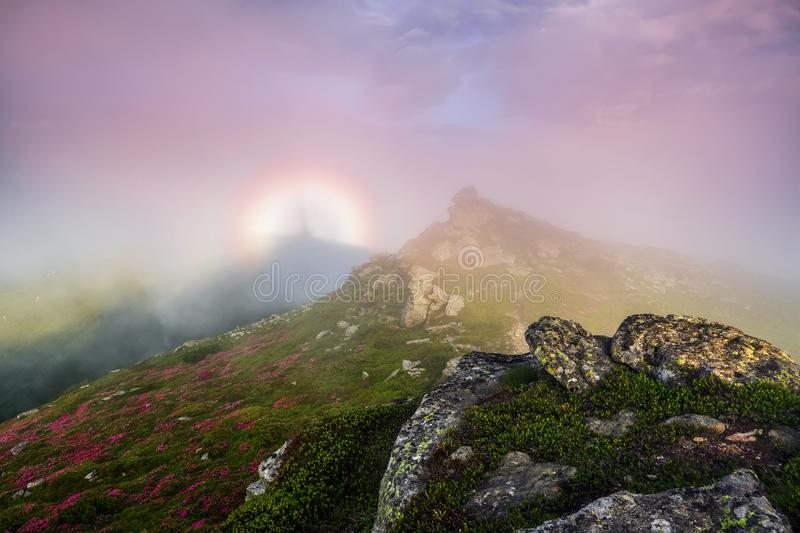 In the pink fog there is a halo of rainbow of the fantastic natural phenomena Brocken spectre. Lawn with the blooming rhododendron. S and rocks. Tourist scenery stock photography