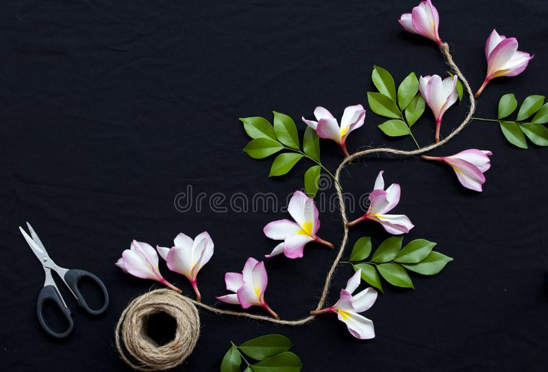 Pink frangipani decorate on background black. Pink flowers frangipani floral of asia with leaf decoration flat lay style on background black stock images