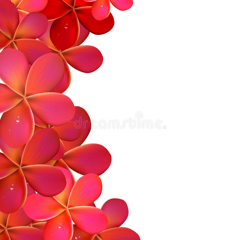 Pink Frangipani Frame royalty free illustration