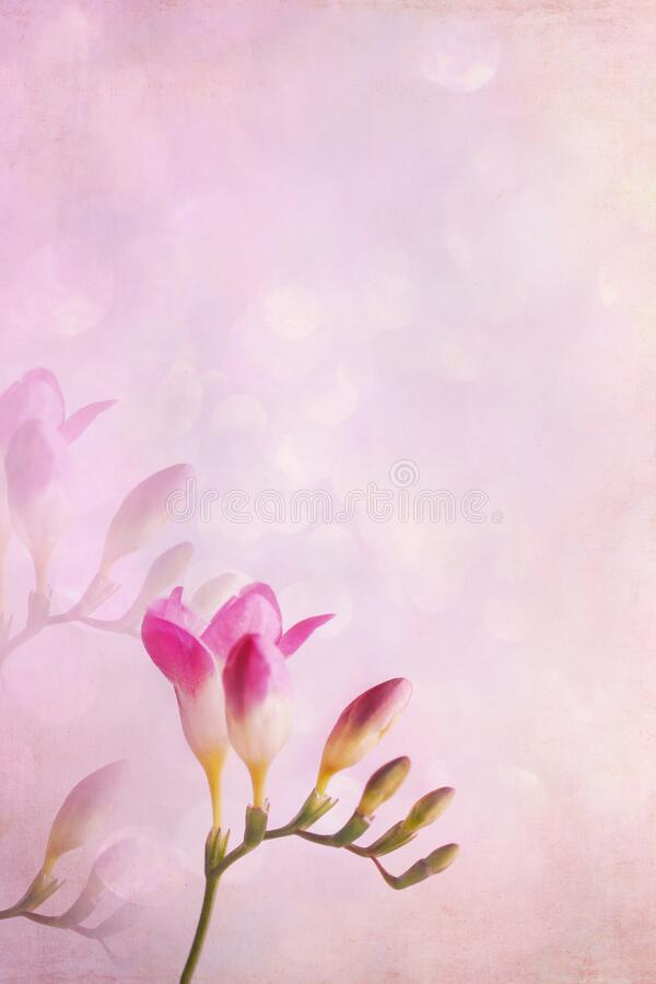 Pink Freesia with Blurred Background stock images