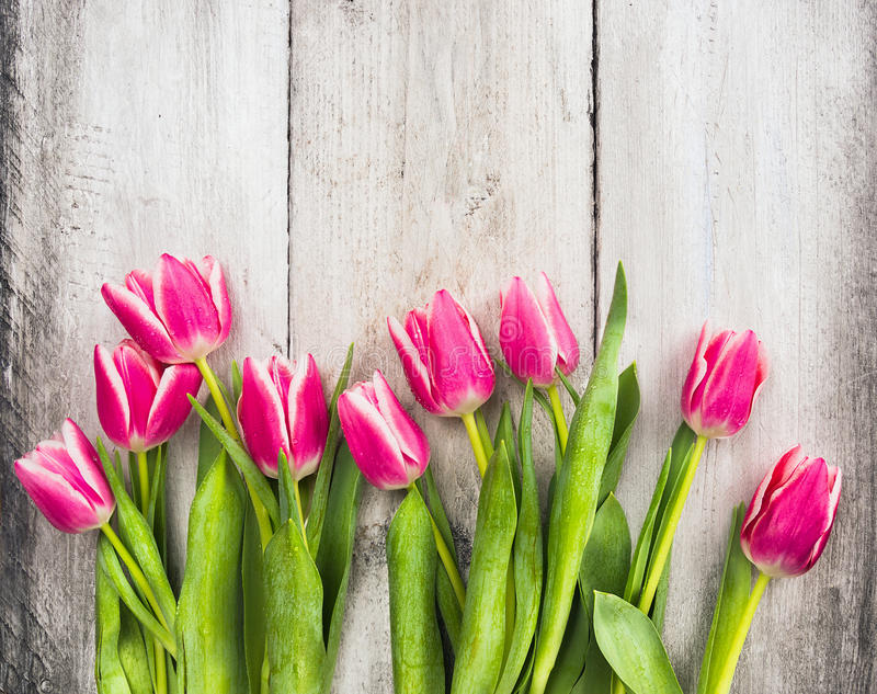 Pink fresh tulips flowers on gray wooden background stock image