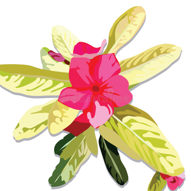 Pink Fuchsia Summer flower isolated. On white. Watercolor Vector royalty free illustration