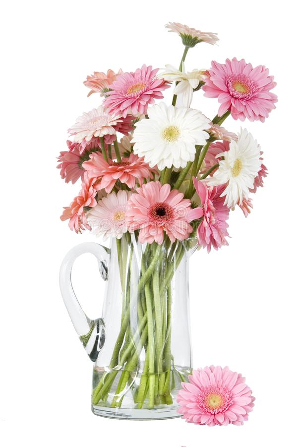 Download Pink Gerber Daisies In Vase Isolated On White Back Stock Image - Image of flower, pretty: 10208567
