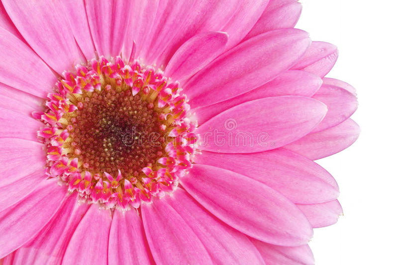 Download Pink gerbera stock image. Image of bright, image, colorful - 22282451
