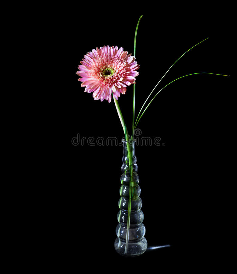 Download Pink gerbera in glass vase stock photo. Image of green - 22557728