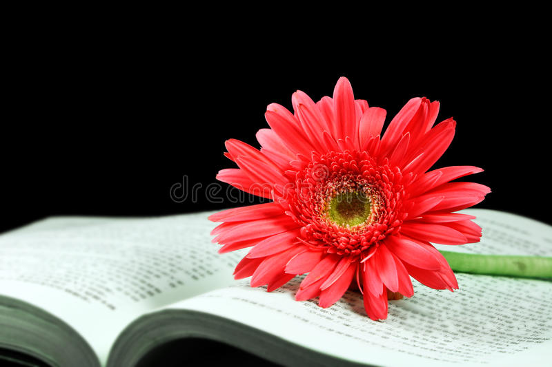 Download Pink Gerbera On The Open Book Stock Image - Image of literature, romance: 17133937