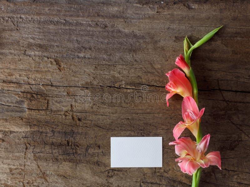 Pink gladiolus flower stock photo