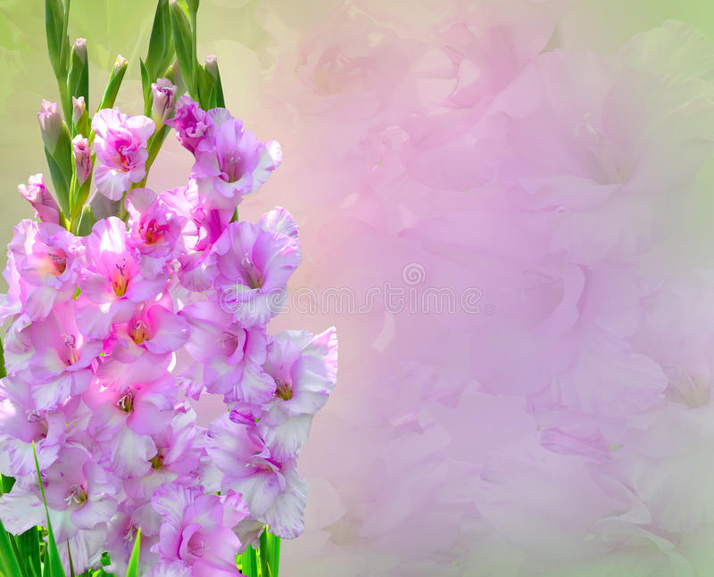 Pink Gladiolus Flowers Bouquet royalty free stock photos