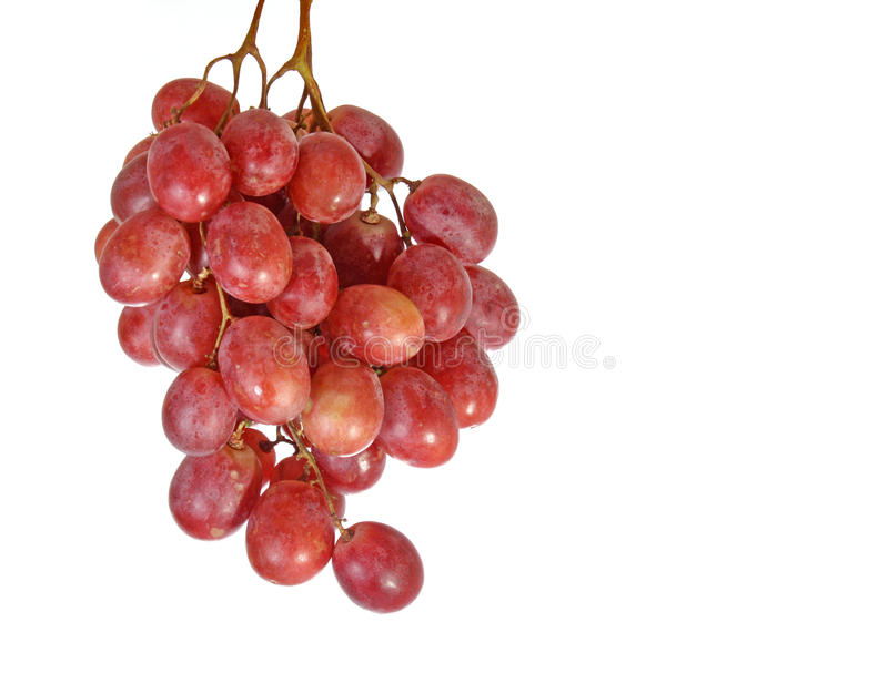 Pink grape stock photo