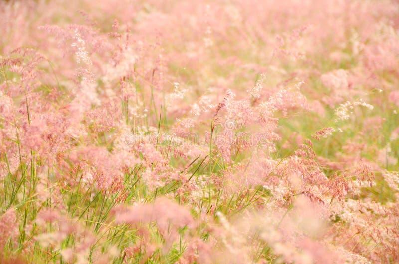 Pink Grass royalty free stock photos