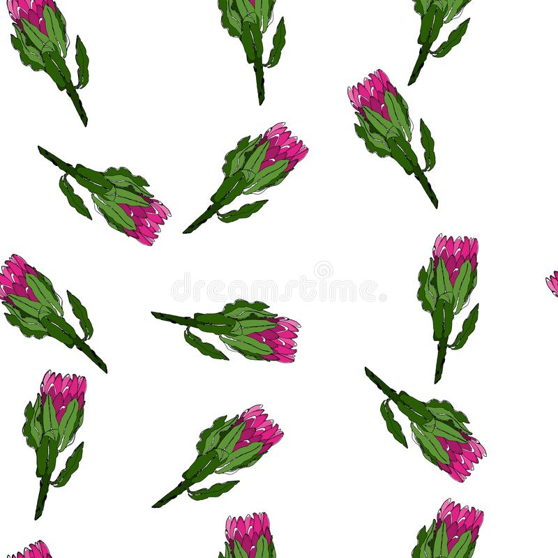 Pink green flower patern. Pink and green flower protea patern. Cute summer flower. Line sketch stock illustration