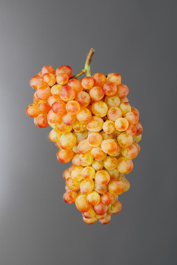 Pink and green muscat grapes vine, gray background royalty free stock images