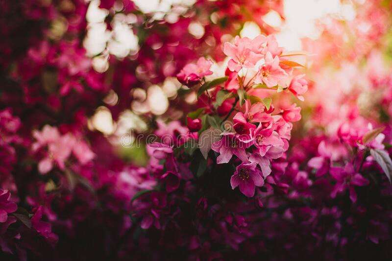 Pink Green and Purple Flowers during Daytime stock photo