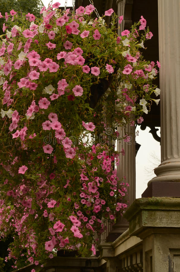 Pink hanging summer flower baskets porch pillars royalty free stock images