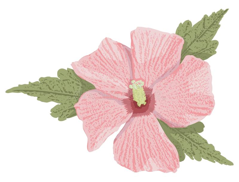 Download Pink hibiscus stock vector. Illustration of isolated - 20908062