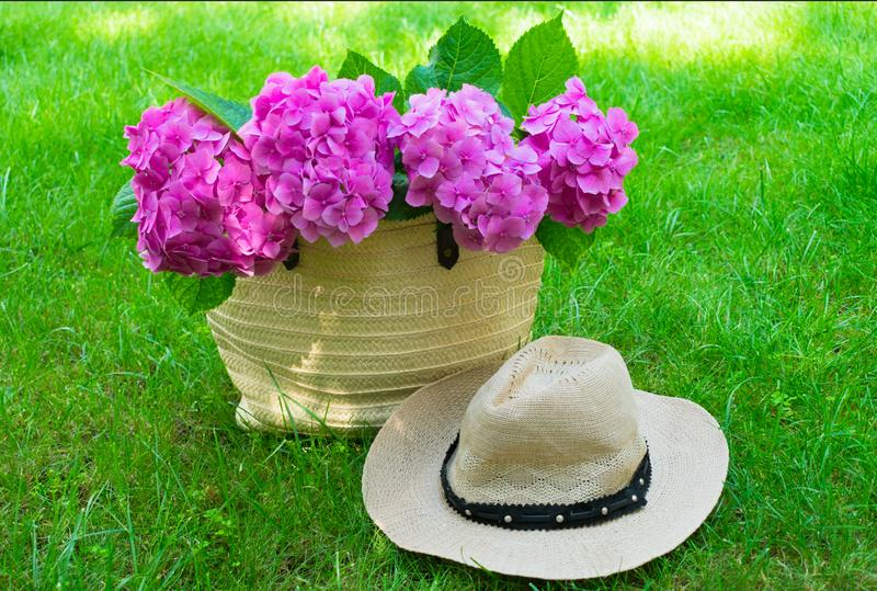 Pink hydrangea flowers in a wicker women`s summer bag and a sun hat on lush green grass. stock photos