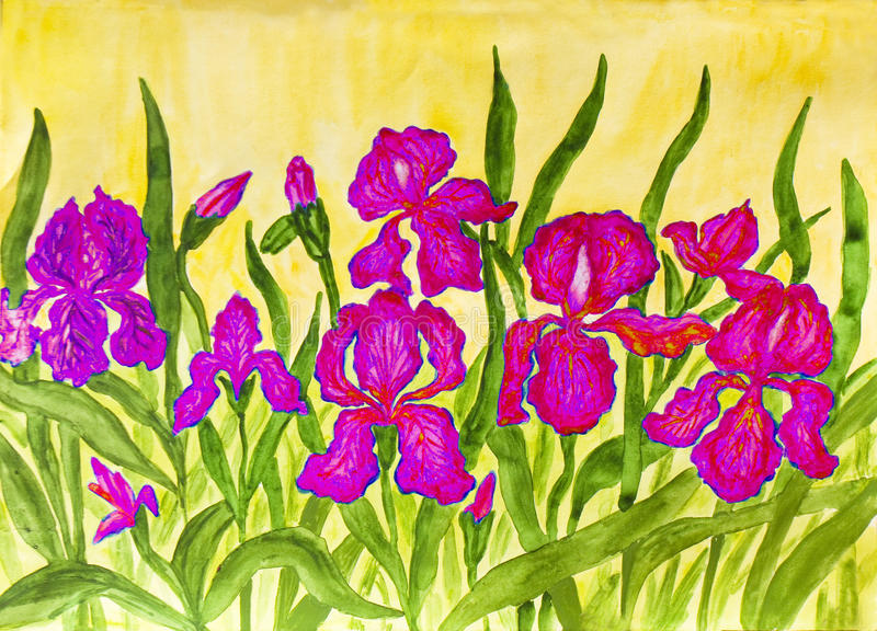 Pink irises. Hand painted picture, watercolours, flower bed with many pink irises on yellow background royalty free illustration