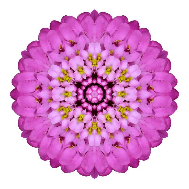 Free Pink Kaleidoscopic Flower Mandala Isolated On White Stock Images - 35042314